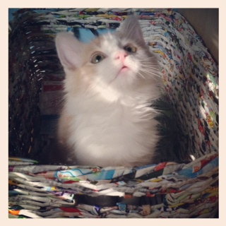 Oliver is getting bigger every day! Here he is sitting in my &quot;Recycle&quot; basket. 